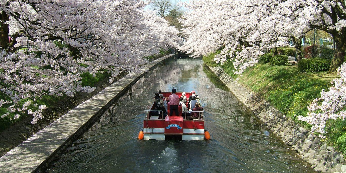 富山市内の桜の名所・松川でお花見クルーズ   観光情報特集 ...